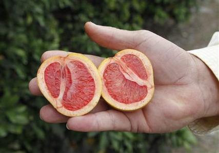Citrus affected by 'greening', an insect-borne bacterial disease is shown as Larry Hardie, a grove manager for Barnes Citrus, Inc. holds malformed star ruby grapefruit in a grove in Vero Beach, Florida December 1, 2010. REUTERS/Joe Skipper