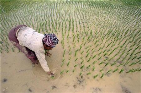 A Lao woman transplants rice seedlings in a paddy field on the outskirts of the capital January 26. The worst flooding in memory last year has severely affected Laos' rice supply for 1997, and aid agencies are preparing to help meet the deficit. REUTERS/Darren Whiteside
