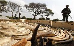 <p>A Kenya Wildlife Service (KWS) officer stands guard near a shipment of elephant tusks and rhino horns intercepted at the Jomo Kenyatta international airport in the capital Nairobi, August 23, 2010. REUTERS/Thomas Mukoya</p>