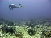 <p>A diver explores dead coral reefs in Gili Trawangan at Indonesia's Lombok island May 13, 2009. REUTERS/Nila Tanzil</p>