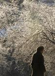 <p>Женщина проходит мимо дерева, покрытого льдом и снегом, в Москве 30 декабря 2010 года. Москву ждут снежные и холодные выходные с ночной температурой ниже минус 10 градусов, прогнозируют синоптики. REUTERS/Denis Sinyakov</p>