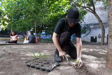 <p>Martin Maistrello, a member of art group Articultores, plants seedlings in a public park in Buenos Aires February 2, 2011. Forget potted plants and privet hedges; a group of Buenos Aires artists want to make the Argentine capital a free-for-all kitchen garden, turning neglected parks and verges into verdant vegetable patches. REUTERS/Marcos Brindicci</p>