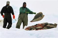 <p>Sealers load up a sled with harp seal pelts on an ice floe in the Gulf of St. Lawrence near Iles-de-la-Madeleine, PQ, March 23, 2009. REUTERS/Paul Darrow</p>