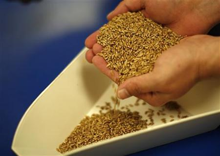 A man holds raw wheat at the Nebraska university in Lincoln, Nebraska in this May 5, 2008 file photo. REUTERS/Carlos Barria