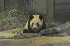 <p>A male giant panda named Bili is seen at the Ueno zoo in Tokyo February 22, 2011. Panda fever showed few signs of dying down in Japan on Tuesday after the arrival in Tokyo of the country's latest pair of giant pandas from China. REUTERS/Tokyo Zoological Park Society/Handout</p>