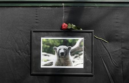 A photograph showing polar bear Knut is set up next to a book of condolence at the Berlin zoo, March 21, 2011. REUTERS/Tobias Schwarz