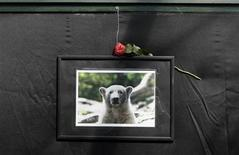<p>A photograph showing polar bear Knut is set up next to a book of condolence at the Berlin zoo, March 21, 2011. REUTERS/Tobias Schwarz</p>