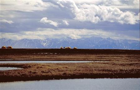The U.S. Fish and Wildlife Service bird research camp on the Canning River Delta within the 1002 Area of the Arctic National Wildlife Refuge coastal plain is seen in this undated handout photo provided by the U.S. Fish and Wildlife Service Alaska Image Library. REUTERS/HANDOUT/U.S. Fish and Wildlife Service Alaska Image Library