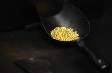 A shovel with gold granules is pictured at the Austrian Gold and Silver Separating Plant ''Oegussa'' in Vienna in this February 28, 2011 file photo. REUTERS/Lisi Niesner/Files