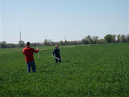 Crop scouts calculate yields in a Kansas wheat field, May 3, 2011. REUTERS/Mark Weinraub