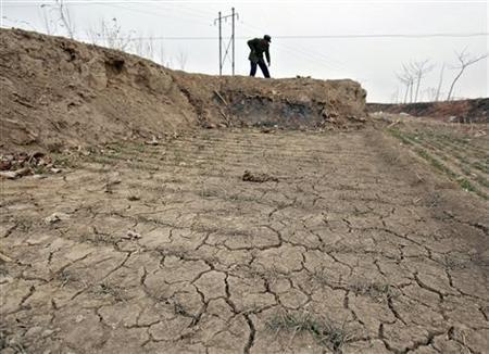 A farmer shovels soil for irrigating a wheat field on the outskirts of Luanchen County, Hebei province February 18, 2011. China's drought-hit wheat-growing areas shrank further as of Sunday as irrigation expanded, the Ministry of Agriculture said on Monday. REUTERS/Christina Hu