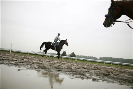 Race horses in a file photo. REUTERS/File
