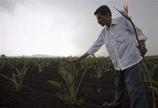 <p>Flower grower Rahul Pawar picks bird of paradise in a field during a tour of his property in Satara district, about 285km (177 miles) south of Mumbai May 10, 2011. REUTERS/Vivek Prakash</p>