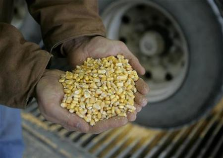 Raw corn is shown as it is unloaded for processing at an ethanol plant in Iowa, December 6, 2007. REUTERS/Jason Reed