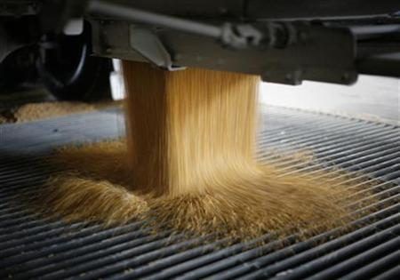 A truckload of corn is dumped into a chute at the Lincolnway Energy plant in the town of Nevada, Iowa, in this December 6, 2007 file photo. REUTERS/Jason Reed