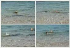 <p>A combination of video grabs (top L to bottom R) taken from footage shot June 1, 2011 shows a dog swimming with sharks before diving underwater, appearing to bite one of them, in the shallow waters in the west Australian town of Broome. REUTERS/Russell Hood-Penn via Reuters TV</p>