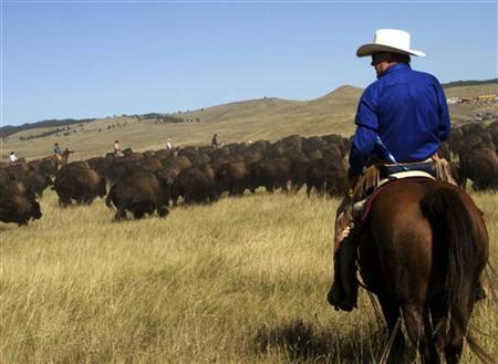 Cowboys round up buffalo in Custer State Park in South Dakota, September 27, 2010. REUTERS/Ron Fry