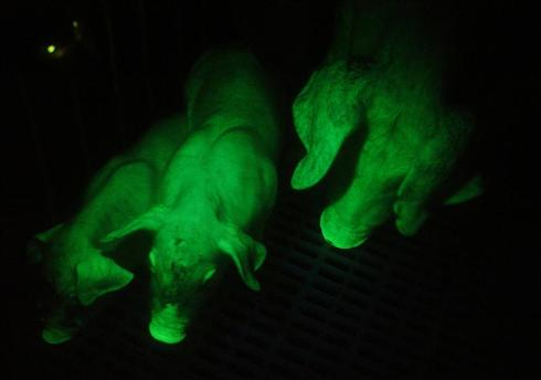 Animals that glow