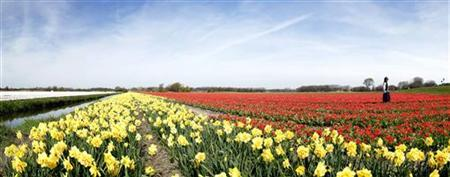 A woman has her picture taken in a Dutch tulip field in this stitched photo, consisting of nine separate photos taken in sequence, in Noordwijk April 24, 2010. Thijs Zonneveld dreams of an artificial mountain 5 km wide and between 1 and 2 km in height, which would surpass the world's tallest man-made building, the 828-meter high Burj Khalifa skyscraper in Dubai. REUTERS/Michael Kooren