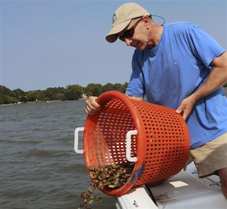 Kendall Osborne deposits oysters he has grown at a reef on the Lafayette River in Norfolk, Virginia August 24, 2011. REUTERS/Matthew Ward