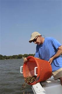 Kendall Osborne deposits oysters he has grown at a reef on the Lafayette River in Norfolk, Virginia, August 24, 2011. REUTERS/Matthew Ward