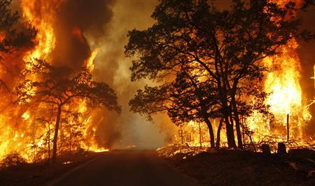 Flames engulf a road near Bastrop State Park as a wildfire burns out of control near Bastrop, Texas September 5, 2011. REUTERS/Mike Stone