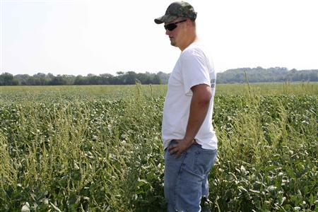 Jake Conner, who farms 2,000 acres Paola, Kansas, is seen in this September 1, 2011 photograph in northeast Kansas with his father-in-law, struggles to deal with crop-choking weeds that have grown resistant to Roundup, the world's best-selling herbicide. The implications are far-reaching and, to some, frightening as more and more weeds grow resistant every season, sucking up nutrients needed for corn and other crops. And now, with food production needs increasing, experts in the industry say the problem is reaching a crisis. REUTERS/Carey Gillam