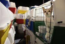 <p>Cats wait to be loaded into trucks after arriving from Lebanon by cargo jet at McCarran International Airport in Las Vegas, September 26, 2006. REUTERS/Steve Marcus</p>