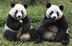 <p>Imagen de archivo de los pandas gigantes Qiqi y Zhizhi en el centro de investigación base de reproducción de la especie de Chengdu, China, dic 21 2011. China comenzó el miércoles a enviar a pandas criados en cautiverio a un área protegida en el sudoeste de la provincia de Sichuan, en un intento ambicioso para reconstruir la mermada población de pandas gigantes del país en un hábitat natural. REUTERS/China Daily SOLO USO EDITORIAL</p>