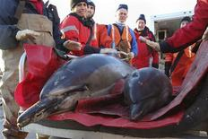 <p>A female dolphin and her calf are transported by a team from the International Fund for Animal Welfare and the New England Aquarium before being released back into Cape Cod Bay, south of Boston in this January 14, 2012 handout picture supplied to Reuters on January 17, 2012. U.S. animal welfare advocates are perplexed by dozens of dolphins swimming onto land along the scenic Cape Cod shores south of Boston beginning late last week, one of the largest cases of dolphins stranding themselves in years. REUTERS/Julia Cumes/IFM/Handout</p>