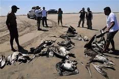 死んだペリカンを並べる動物保護活動家ら(2012年4月27日、ペルー・ピウラ近郊)