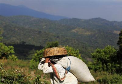 Coffee from El Salvador's slopes