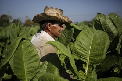 16th Annual Havana Cigar Festival