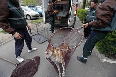 Romania's stray dogs