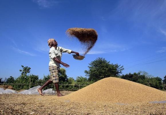 A farmer winnows paddy crops at a field on the outskirts of Agartala, November 28, 2013. REUTERS/Jayanta Dey/Files