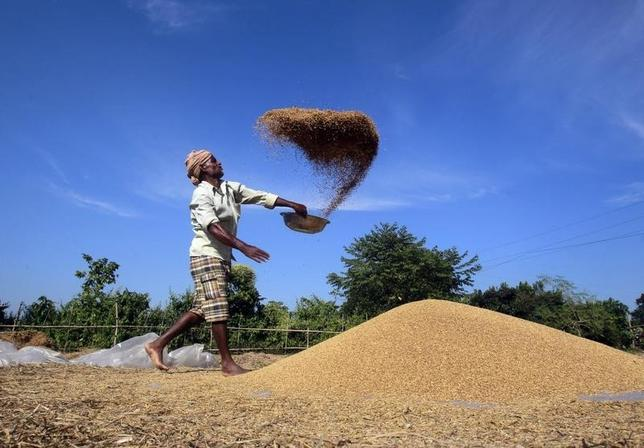 A farmer winnows paddy crops at a field on the outskirts of Agartala, November 28, 2013. REUTERS/Jayanta Dey/Files