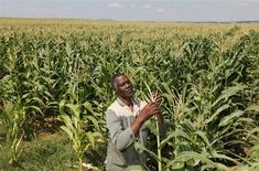 A farmer  inspects his crop in  the Eastern Free State, in this February 29, 2012 file photo.    REUTERS/Siphiwe Sibeko
