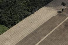 Plantação de trigo perto de Santarém, no Pará. REUTERS/Nacho Doce
