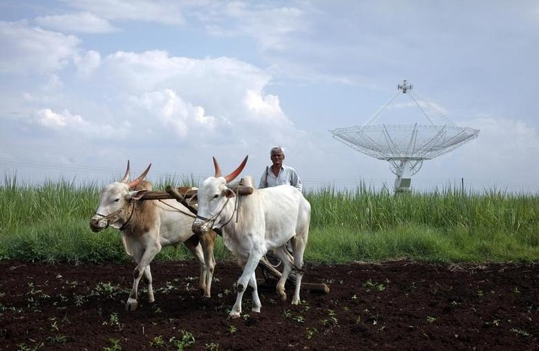 A farmer uses his oxen to till his land in front of a satellite dish set up in an adjacent field in Narayangaon September 28, 2012. REUTERS/Vivek Prakash/Files