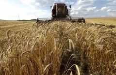 Una cosechadora combinada de granos en un campo en Menzygura, Bielorrusia, jul 20 2014. Los inversores están volviendo lentamente a las materias primas, atraídos por un mayor crecimiento económico global y más volatilidad dentro de subsectores, tipificado por flujos actuales de inversión desde granos hacia metales industriales.  REUTERS/Vasily Fedosenko