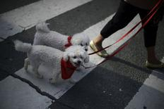 Dogs in Pamplona July 8, 2014. REUTERS/Vincent West