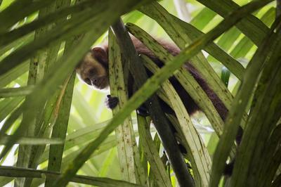 Animals of the Amazon