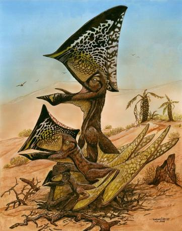A reconstruction of three ontogenetic (growth) stages of the new pterosaur Caiuajara dobruskii is seen in an undated illustration released on August 13, 2014.  REUTERS/Maurilio Oliveira/Museu Nacional-UFRJ/Handout