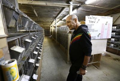 Hollywood mogul Simon buys fur farm with animal rights...