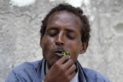 Khat - Somalia's paradise flower