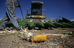 Imagen de archivo de la preparación de una cosechadora de maíz en la granja Kenison en Levan, EEUU, oct 5 2013. La producción de soja y maíz del 2014 en Estados Unidos, que ya se estimaba que alcanzaría niveles récord, será aún mayor que la proyectada hace un mes, dijo el jueves el Departamento de Agricultura estadounidense, que además redujo abruptamente las previsiones de cosecha de maíz de Argentina. REUTERS/Jim Urquhart