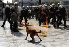 Saucisse (Loukanikos en grec), le chien errant devenu le symbole de la contestation anti-austérité en Grèce après avoir été au premier rang de plusieurs cortèges, est mort d'une crise cardiaque. /Photo d'archives/REUTERS/Yannis Behrakis