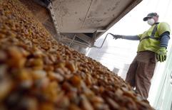 Un trabajador junto a granos de maíz en una compañía en Minooka, Illinois. Imagen de archivo, 25 septiembre, 2014.  La consultora privada Informa Economics elevó su proyecciones de la superficie sembrada con maíz y soja en Estados Unidos para la campaña 2015 y recortó la de trigo, en una nota enviada el viernes a clientes. REUTERS/Jim Young