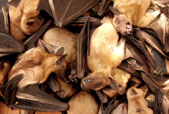 Fruit bats are seen for sale at a food market in Brazzavile, Republic of Congo, in this file photograph dated December 15, 2005. REUTERS/Jiro Ose/Files