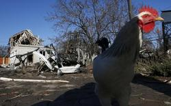 "A chicken walks near a residential block and a car damaged by recent shelling in Donetsk, eastern Ukraine, November 6, 2014. Kiev said on Wednesday it would halt payment of state funds in areas controlled by pro-Moscow rebels, as both sides hardened positions in what is rapidly becoming a ""frozen conflict"": a long-term stalemate that the West believes is Russia's aim. REUTERS/Maxim Zmeyev (UKRAINE - Tags: POLITICS CIVIL UNREST CONFLICT ANIMALS)"